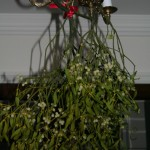 Mistletoe Bunch