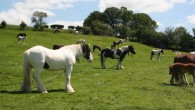 This is the best-known surviving fair for travellers and Gypsies to meet and trade in horses. There are still many traditional horse-drawn caravans which are driven through the lanes of […]
