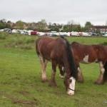 Horses & Fair
