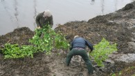 In a unique custom, the Penny Hedge or Horngarth at Whitby is planted in the estuary of the Upper Harbour – it must be completed by 9am on Rogation Wednesday, […]