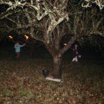 Wassail tree